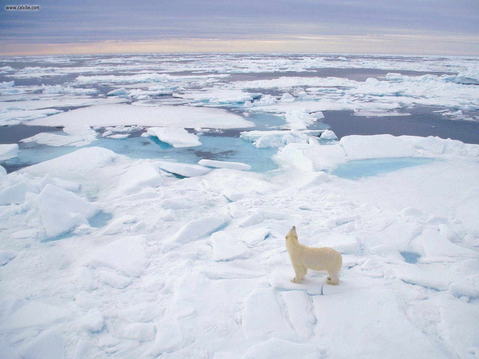 Von echten Eisbären und der Vergänglichkeit von Speicherkarten